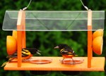 Grand Slam Oriole Feeder